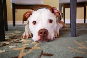 choosing pet-friendly floors