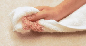 cleanign up a stain from a carpet with Carpet Stain Protectant